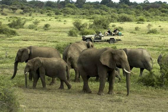 Dubai Safari Park eröffnet