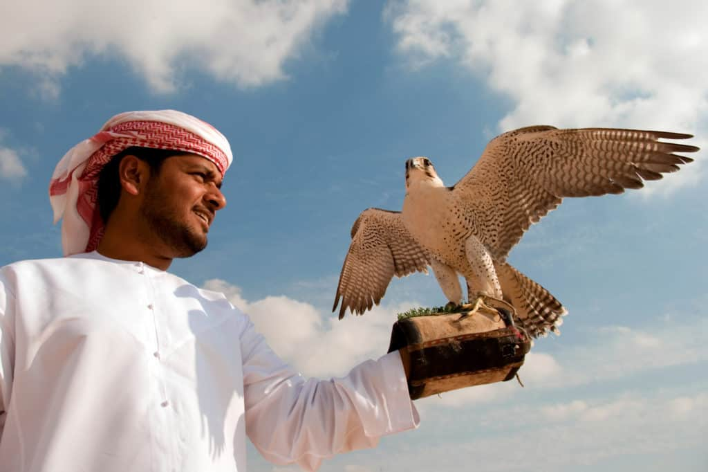 Dubai Kultur Falknerei