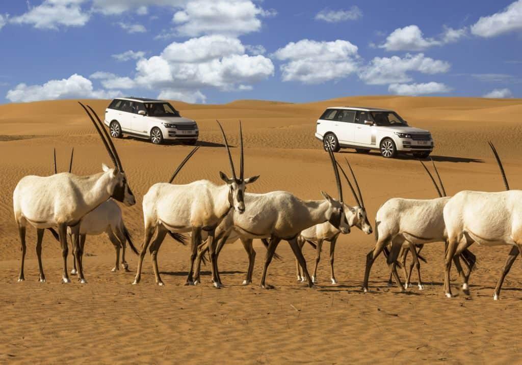 Antilopen und Range Rover Wüste Dubai