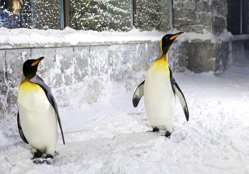 Pinguin Show Ski Dubai