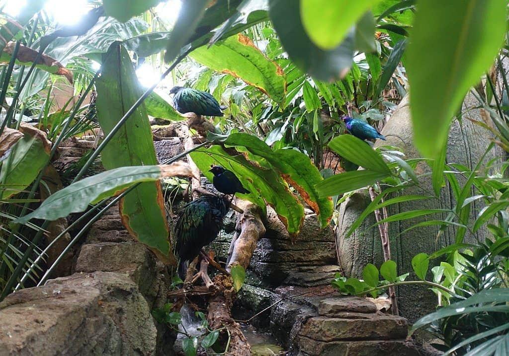 Green Planet Pflanzenwelt