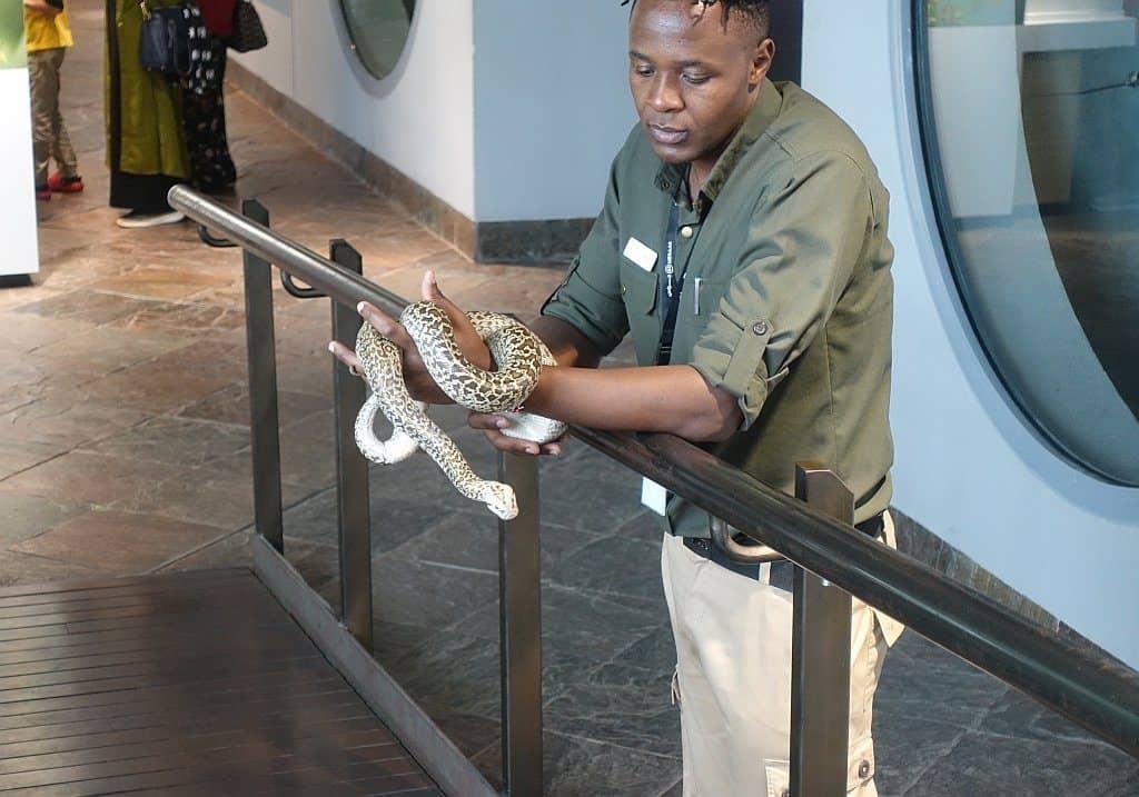 Python Green Planet Dubai