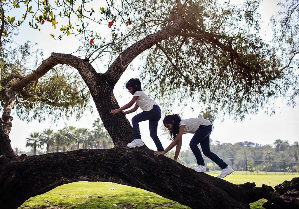 Baum im Safa Park Dubai